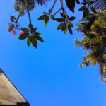 新しいフィリピンブログをWordPressで制作しました!
