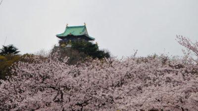 大阪城のきれいな桜