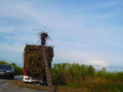 バコロドのさとうびき畑