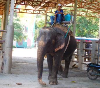 チェンマイで象に乗るならメーテンエレファントパーク