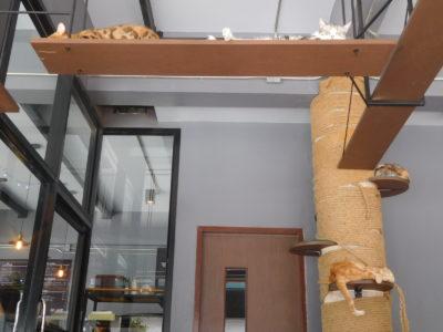 チェンライで大人気の猫カフェ2