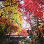 春の桜より秋の紅葉が世界で一番きれいな京都の名所